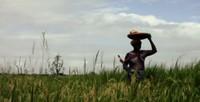 Due donne mozambicane che lottano quotidianamente contro una società che le discrimina. Come vivono, cosa pensano e nascondono, cosa sognano e inventano ogni giorno per sopravvivere