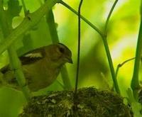 * Presentazione di fauna, flora e prodotti tipici del Parco Regionale dei Sassi di Rocca Malatina