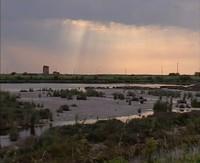 * Parco Regionale Delta del Po* Particolarità delle zone umide e vallicoltura*