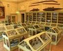 Il palazzo delle meraviglie : scienza e arte nei musei di Palazzo Poggi