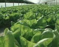 * Difficoltà economiche delle aziende agricole in Sardegna, Sicilia e Campania * Interviste ad agricoltori e produttori * Farmers Market con vendita diretta al consumatore *