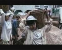 * Sfruttamento di lavoratori stagionali immigrati in Puglia * Nuove forme di schiavitù *