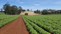Direttiva UE contro le pratiche commerciali sleali in agricoltura. L'eurodeputato Paolo De Castro sarà in II Commissione venerdì 15 marzo.