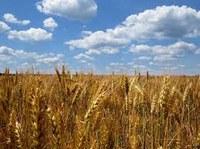 Partecipazione alla fase ascendente. La Regione Puglia si esprime sulla proposta della Commissione europea per combattere le pratiche commerciali sleali nella filiera alimentare.