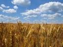 Nella seduta del 25 ottobre 2018, la VI Commissione consiliare della Regione Puglia ha approvato la risoluzione n. 42 in merito alla proposta di direttiva in materia di pratiche commerciali sleali nei rapporti tra imprese nella filiera alimentare COM(2018) 173 final del 12 aprile 2018.